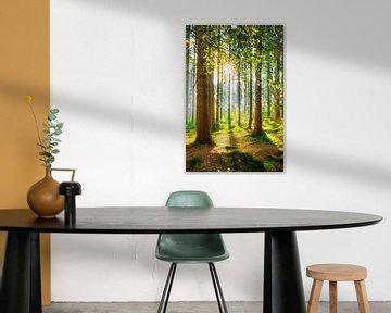 Ein Morgen im Wald mit heller Sonne von Günter Albers