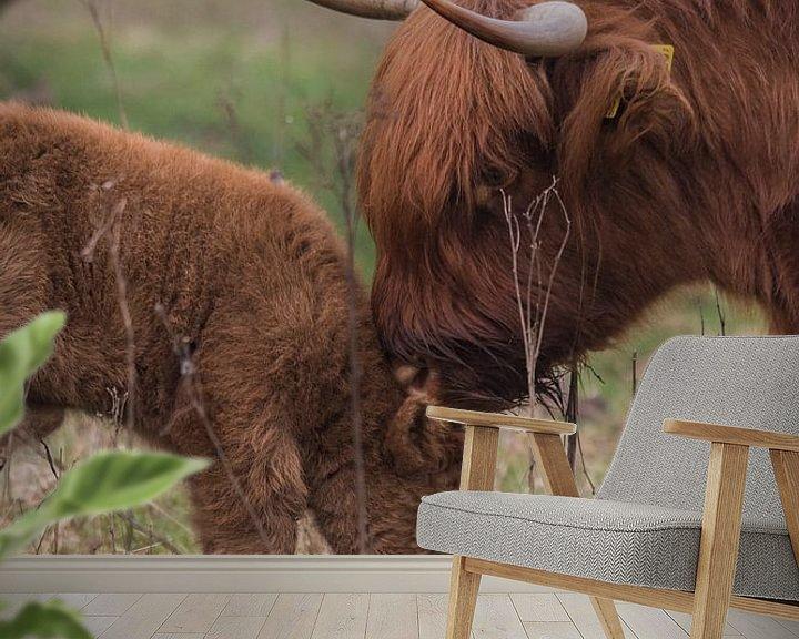 Sfeerimpressie behang: Schotse Hooglander Liefde van Marc van Tilborg