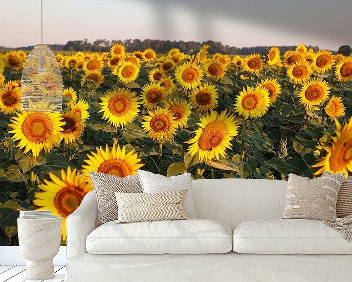 Sfeerimpressie behang: Zonnebloemveld in het ochtendlicht van Erich Werner
