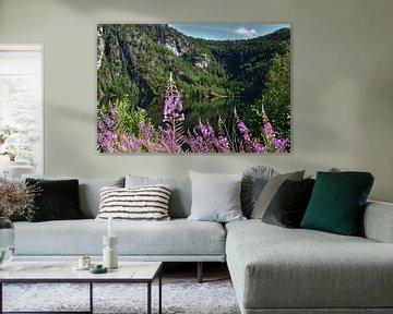 Blumen an den norwegischen Fjorden von Naomi Elshoff