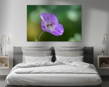 violette Sommerblume von Tania Perneel