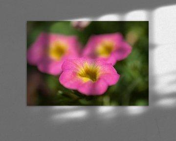 rosa und gelbe Sommerpracht von Tania Perneel