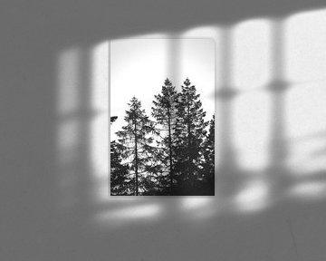 zwart wit van Nienke Stegeman