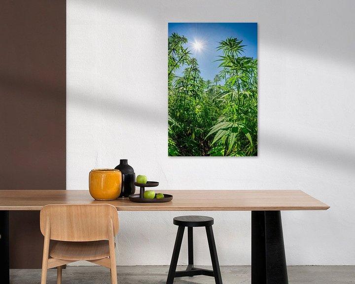 Sfeerimpressie: hennep of marihuana van Günter Albers