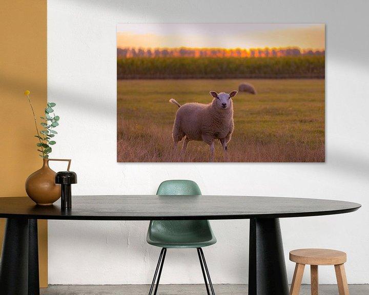 Beispiel: neugierige Schafe von Tania Perneel