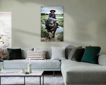 boer op buffel in rijstveld van Karel Ham