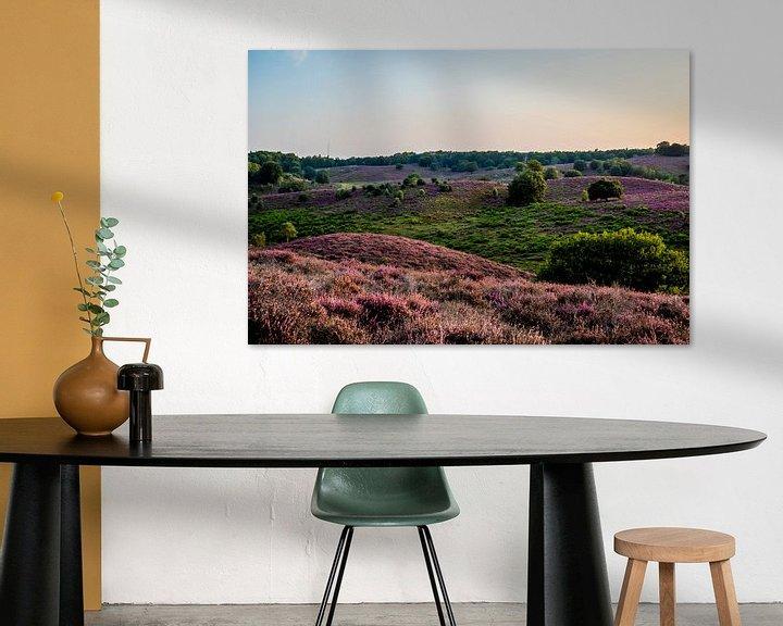 Sfeerimpressie: Heide op Veluwe in volle bloei van Marcel Krijgsman
