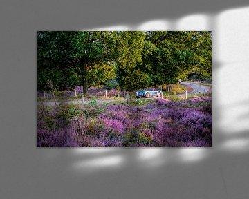 Blühende Heide auf der Posbank von Marcel Krijgsman