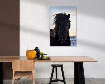 IJslands paard met een blauw en een bruin oog van Elisa in Iceland