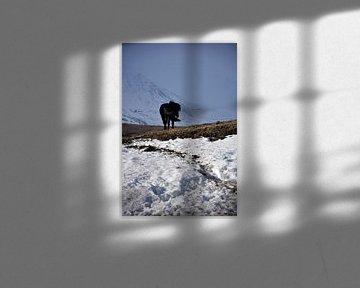IJslands paard in een winterlandschap van Elisa in Iceland