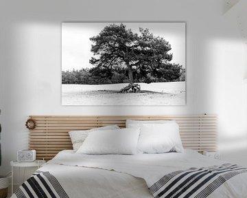 De lopende boom van Mike Peek