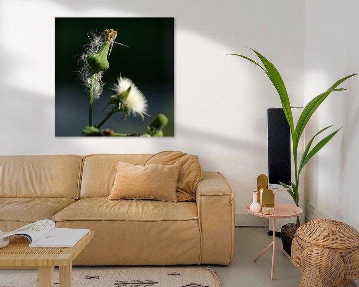 Sfeerimpressie: Paardenbloem uitgebloeid van Lynn van Baaren