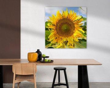 Sonnenblume von Lieselotte Stienstra