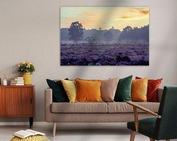 Gouden Heide van Koen Boelrijk Photography