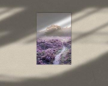 Boom van Licht (verticaal) van Koen Boelrijk Photography