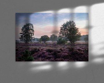 Bloeiende Heide van Koen Boelrijk Photography