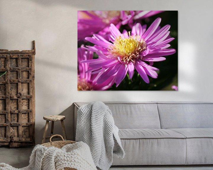 Sfeerimpressie: Roze, bijna uitgebloeide, bloem van Lynn van Baaren
