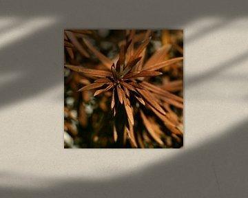 Bruine stekels / naalden van Lynn van Baaren