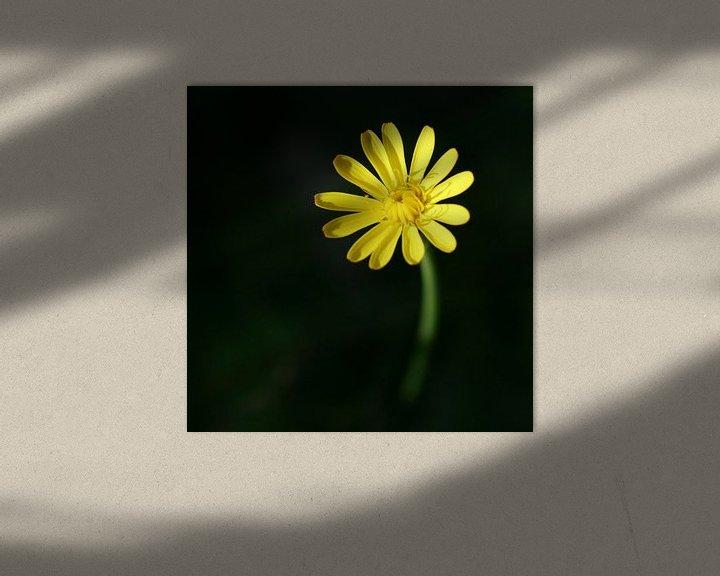 Sfeerimpressie: Gele bloem van Lynn van Baaren