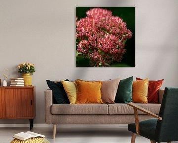 Roze bloemetjes / knopjes van Lynn van Baaren