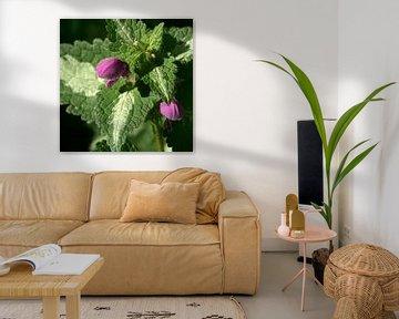 Natuur plant paars 2 van Lynn van Baaren