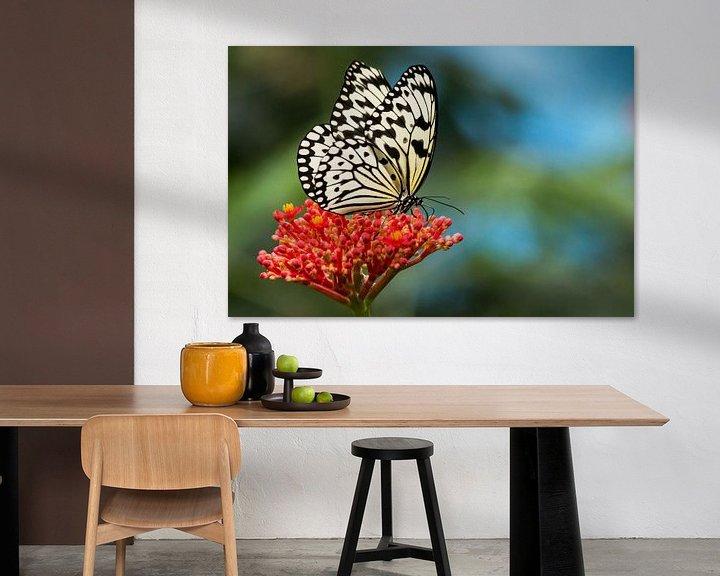 Sfeerimpressie: Vlinder op rode bloem van The All Seeing Eye