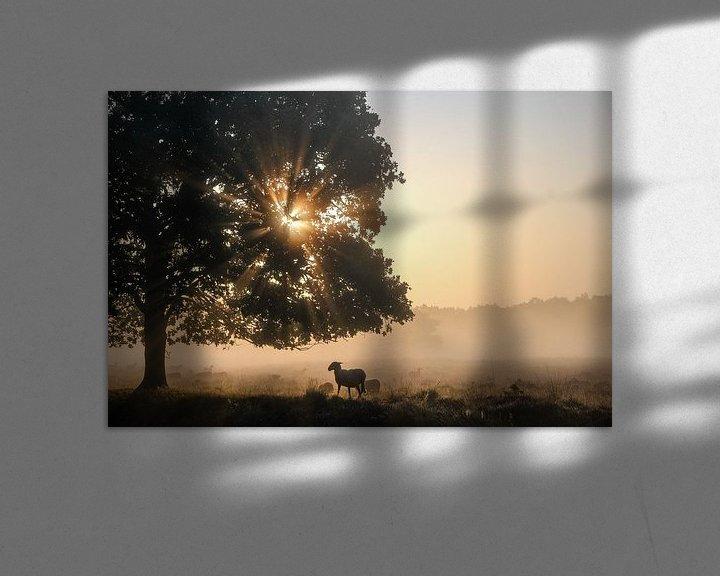 Sfeerimpressie: Drentse schaap van Ilma Fotografie