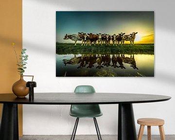 Nieuwsgierige koeien gespiegeld in het water van piet douma