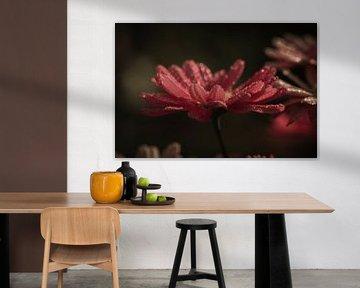Sommerliche Blumen von Carla van Zomeren