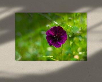 violette Blume von Silvia Rikmanspoel