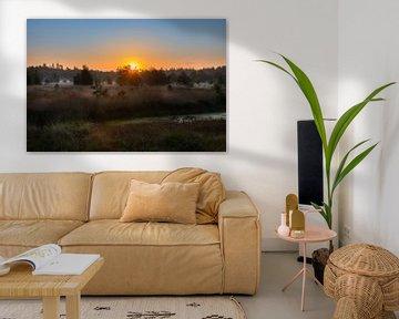 Lever de soleil dans la forêt de Geeser sur Lynxs Photography