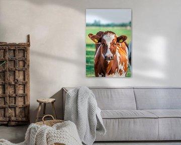 Sie sehen Cow mit einem neugierigen Blick an. von Fotografie Arthur van Leeuwen