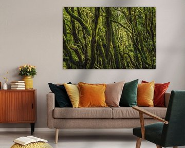 Der haarige Wald von Joris Pannemans - Loris Photography