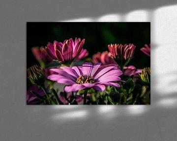 Bloemen in bloei von BTF Fotografie