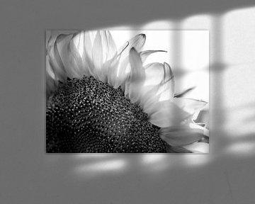 Details einer Sonnenblume in Schwarz/Weiß von Art By Dominic