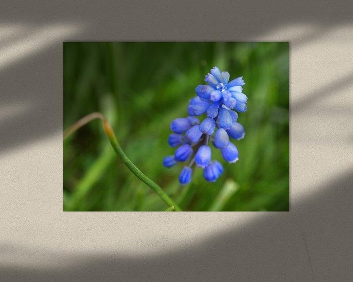Sfeerimpressie: Het blauwe druifje met de diamant van Jon Houkes