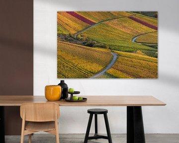 Wijngaarden in de herfst in Stuttgart van Werner Dieterich