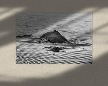 Blauwe Vinvis van Menno Schaefer