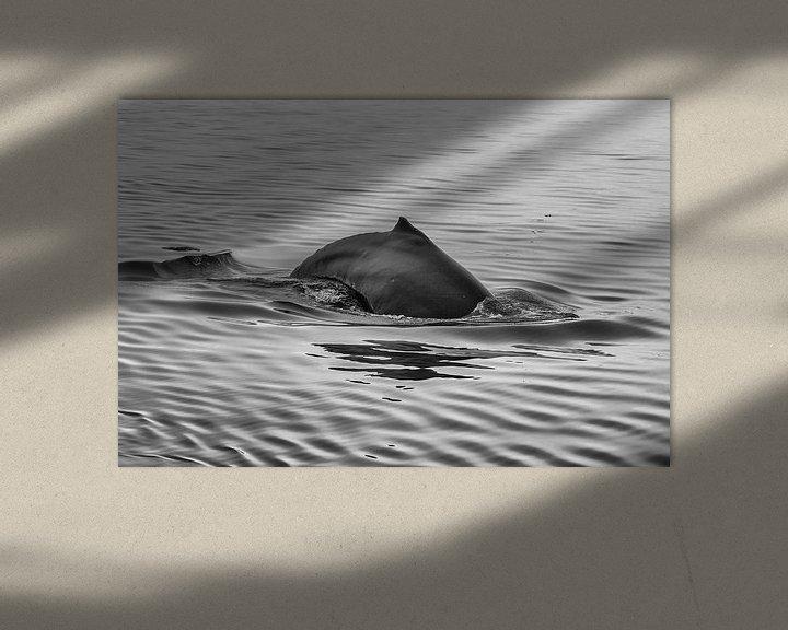 Sfeerimpressie: Blauwe Vinvis van Menno Schaefer