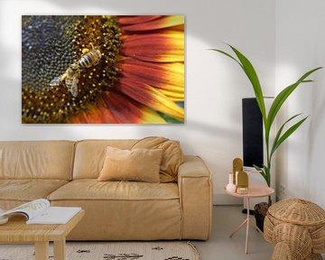 Sonnenblume mit Bienen von luc destoop