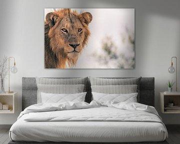 Löwe im Krügerpark von Luuk Molenschot