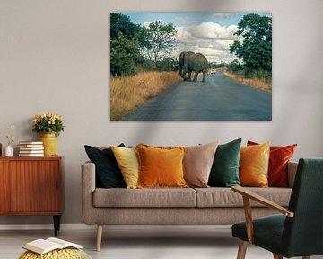 Elefant auf der Straße von Luuk Molenschot