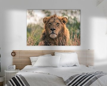 Entspannender Löwe von Luuk Molenschot