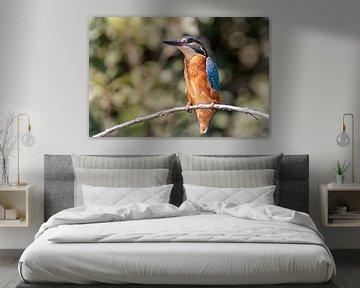 Eisvogel von Dirk van Doorn