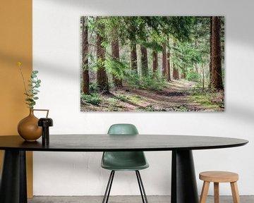 Sentier forestier silencieux sur Mark Bolijn