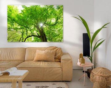 Groene boomtop met zon van Oliver Henze
