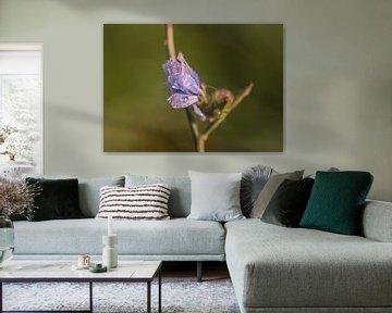 wunderschöne Wildblume von Tania Perneel