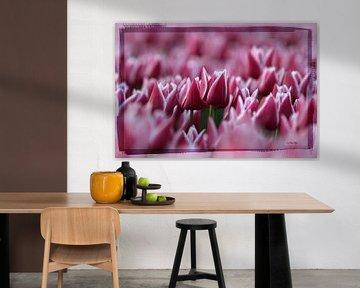 Tulp in bloei von Anton van der Wulp