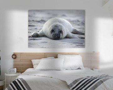 Zeehondje van Joyce Beukenex