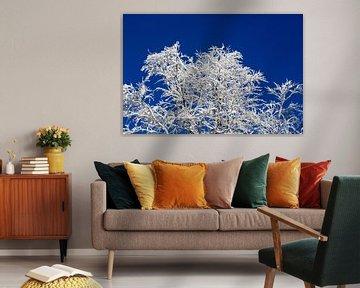 Een echte winterdroom! Gesuikerde takken van bomen, diepblauwe lucht - zo stel je je je de winter vo van Rudolf Brandstätter